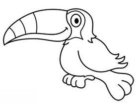 Tukan zeichnen lernen schritt f r