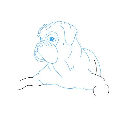hund boxer zeichnen lernen schritt f r schritt tutorial zeichnen leicht gemacht. Black Bedroom Furniture Sets. Home Design Ideas