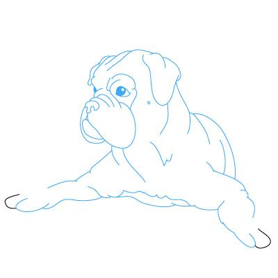 Hund Boxer zeichnen lernen schritt