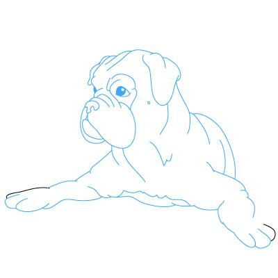 Hund Boxer Zeichnen Lernen Schritt F 252 R Schritt Tutorial