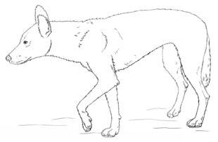 Zeichnen tiere leicht zu Schöne Leichte