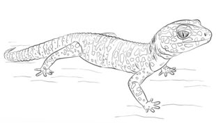 blue tailed skink coloring pages - photo#10