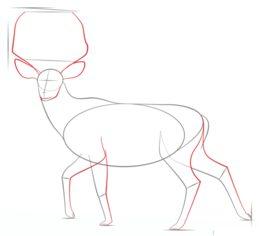 Hirsch Zeichnen Lernen Schritt Für Schritt Tutorial Zeichnen