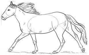 Rennendes Pferd Zeichnen Lernen Schritt Für Schritt Tutorial