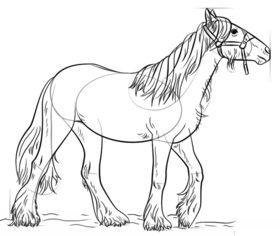 Pferd Zeichnen Lernen Schritt Für Schritt Tutorial Zeichnen Leicht