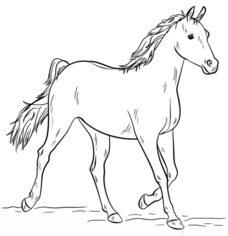 Pferd 3 Zeichnen Lernen Schritt Für Schritt Tutorial Zeichnen