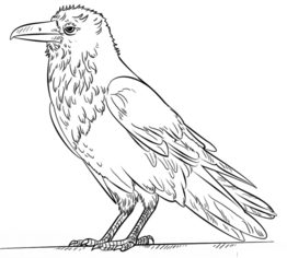 Rabe zeichnen lernen schritt f r schritt tutorial zeichnen leicht gemacht - Coloriage corbeau ...