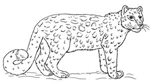 leopard zeichnen lernen schritt f u00fcr schritt tutorial