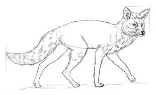 Fuchs Zeichnen Lernen Schritt F 252 R Schritt Tutorial