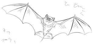 Fledermaus zeichnen lernen schritt f r schritt tutorial - Immagini pipistrello da stampare ...