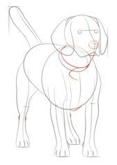 hund beagle zeichnen lernen schritt f r schritt tutorial zeichnen leicht gemacht. Black Bedroom Furniture Sets. Home Design Ideas