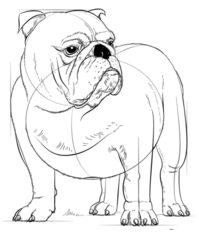 Hund Bulldog Zeichnen Lernen Schritt Für Schritt Tutorial