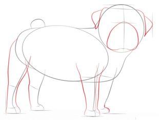 Hund - Mops zeichnen lernen schritt für schritt tutorial ...