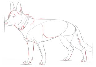 hund sch ferhund zeichnen lernen schritt f r schritt tutorial zeichnen leicht gemacht. Black Bedroom Furniture Sets. Home Design Ideas