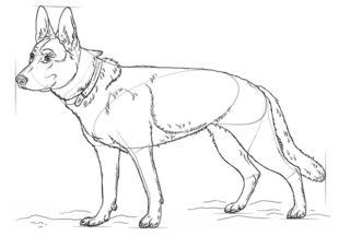 Hund Schaferhund Zeichnen Lernen Schritt Fur Schritt Tutorial