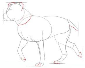 hund pitbull zeichnen lernen schritt f r schritt tutorial zeichnen leicht gemacht. Black Bedroom Furniture Sets. Home Design Ideas