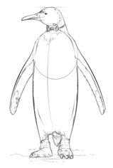 Pinguin 2 Zeichnen Lernen Schritt Fur Schritt Tutorial Zeichnen
