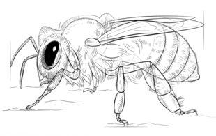 Biene Zeichnen Lernen Schritt Für Schritt Tutorial Zeichnen Leicht