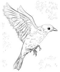 Vogel H ttens nger zeichnen lernen