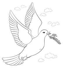 Vogel Taube Zeichnen Lernen Schritt Für Schritt Tutorial