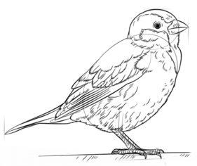 Vogel Spatz Zeichnen Lernen Schritt F 252 R Schritt Tutorial