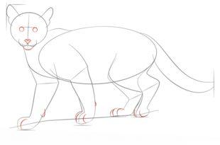 puma zeichnen lernen