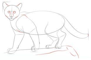 Für Tutorial Schritt Puma Zeichnen Leicht Lernen Yfgymib7v6