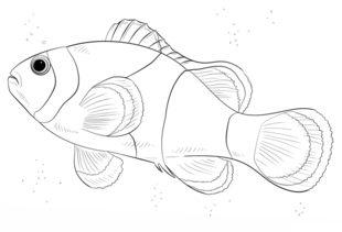 Fisch 3 zeichnen lernen schritt