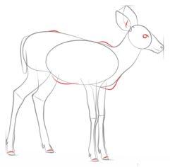 Reh Zeichnen Lernen Schritt Für Schritt Tutorial Zeichnen Leicht