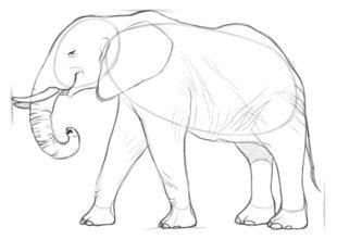 Elefant Zeichnen Lernen Schritt Fur Schritt Tutorial Zeichnen