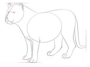 Tiger Zeichnen Lernen Schritt Fur Schritt Tutorial Zeichnen Leicht Gemacht