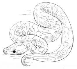 Snake Coloring Sheet