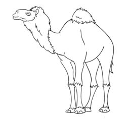 Kamel zeichnen lernen schritt f r
