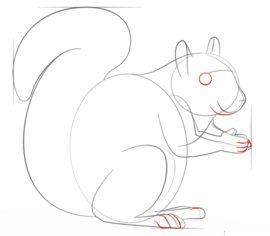 Eichhörnchen 2 Zeichnen Lernen Schritt Für Schritt Tutorial